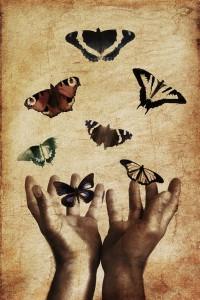 butterflies-843298_640